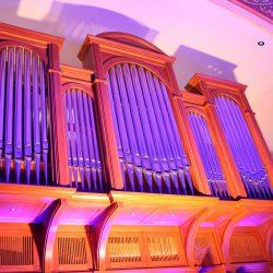 Orgel lila